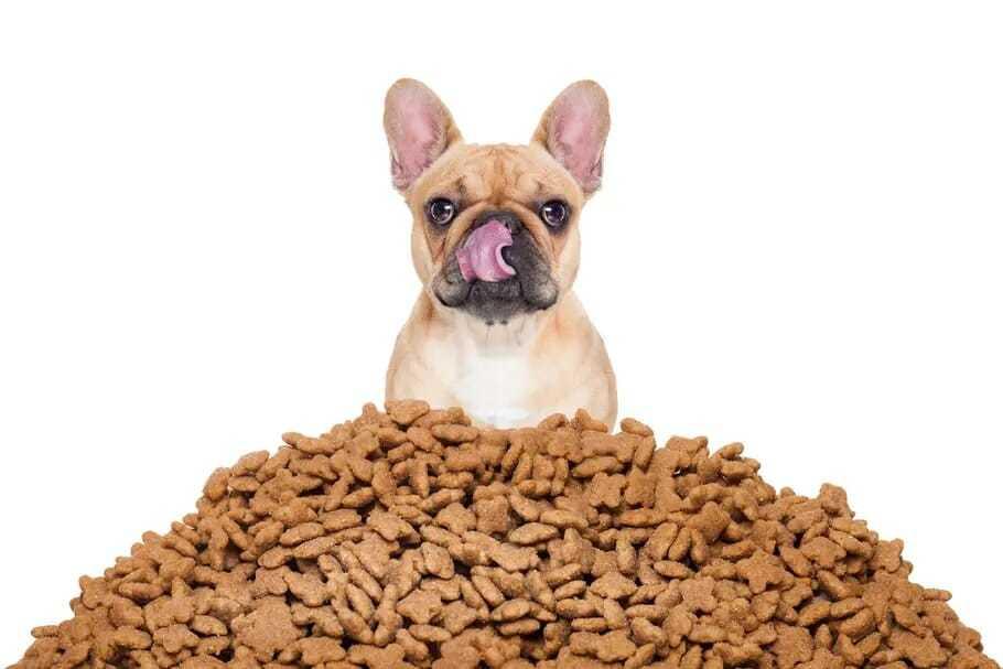 Junk food pour animaux